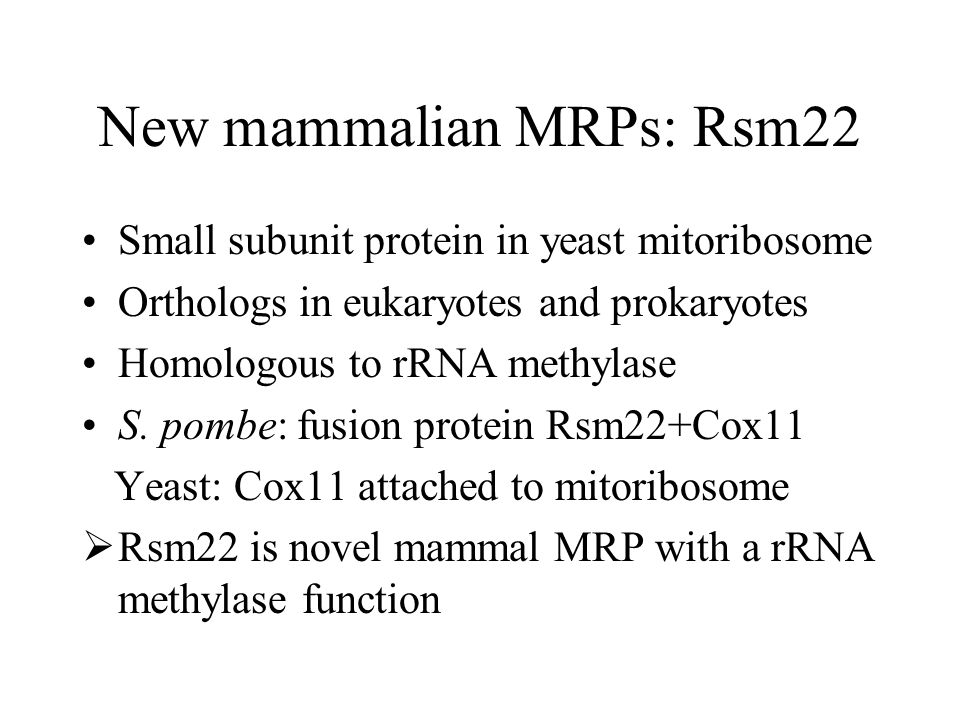 New mammalian MRPs: Rsm22 Small subunit protein in yeast mitoribosome Orthologs in eukaryotes and prokaryotes Homologous to rRNA methylase S.