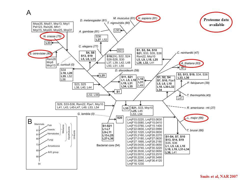 Proteome data available Smits et al, NAR 2007
