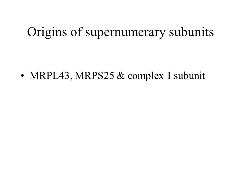 Origins of supernumerary subunits MRPL43, MRPS25 & complex I subunit