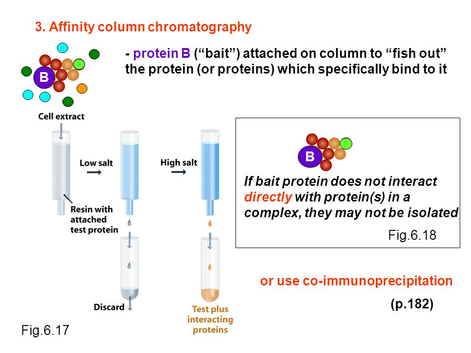 B B If bait protein does not interact directly with protein(s) in a complex, they may not be isolated Fig.6.18 Fig.6.17 3. Affinity column chromatogra