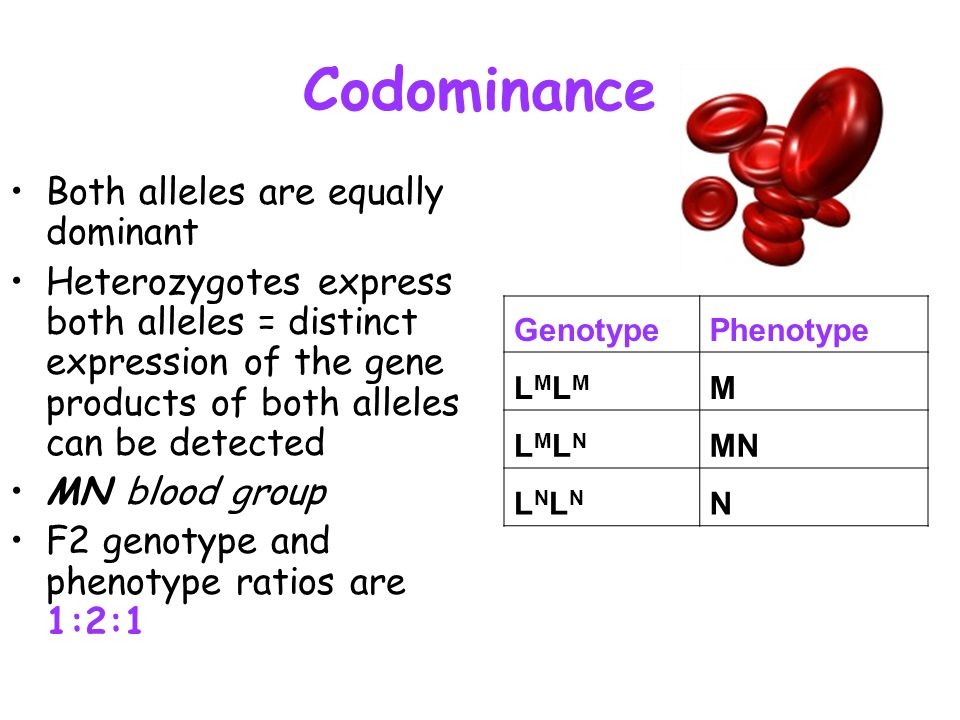 Codominance Both alleles are equally dominant Heterozygotes express both alleles = distinct expression of the gene products of both alleles can be det