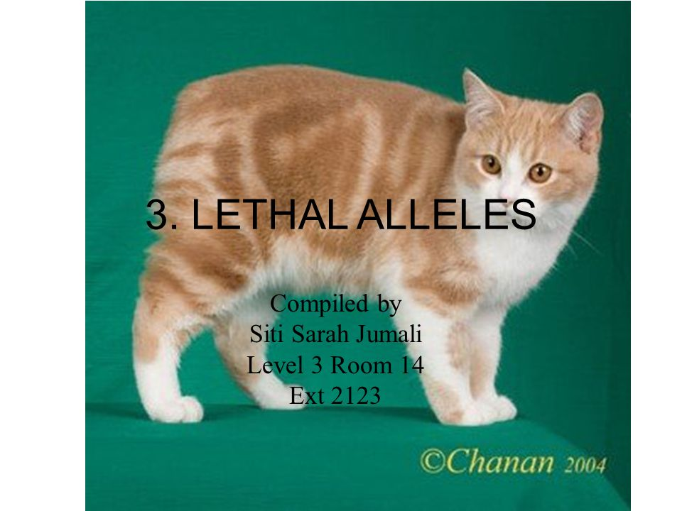 3. LETHAL ALLELES Compiled by Siti Sarah Jumali Level 3 Room 14 Ext 2123