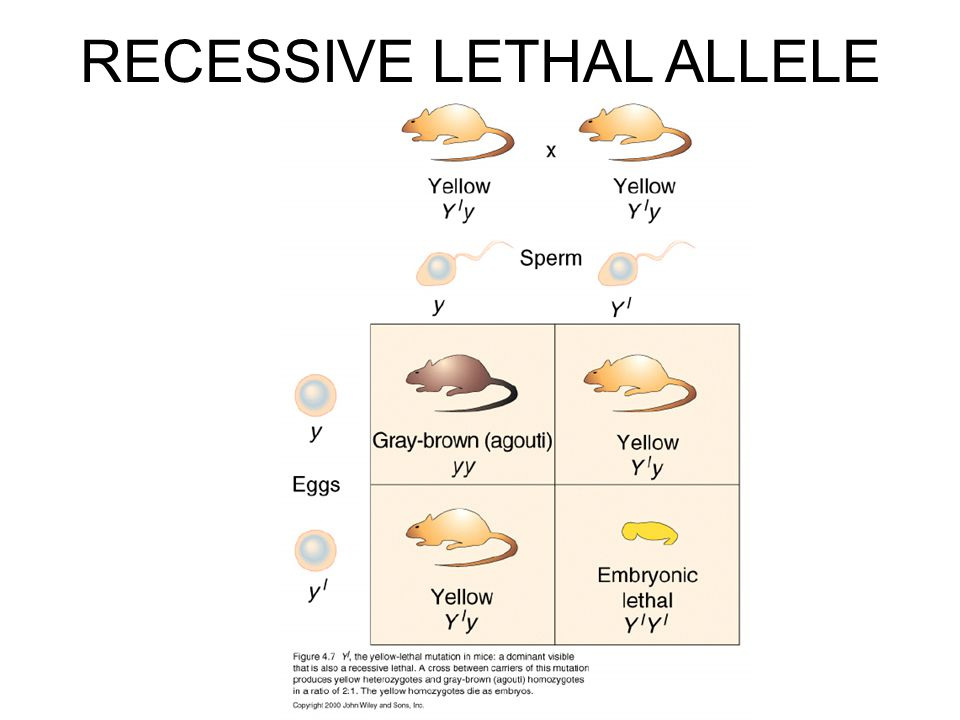 RECESSIVE LETHAL ALLELE