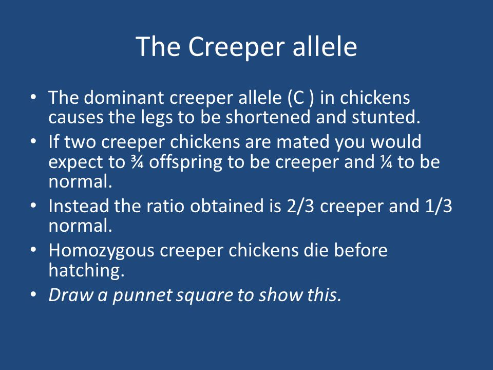 The Creeper allele The dominant creeper allele (C ) in chickens causes the legs to be shortened and stunted. If two creeper chickens are mated you wou