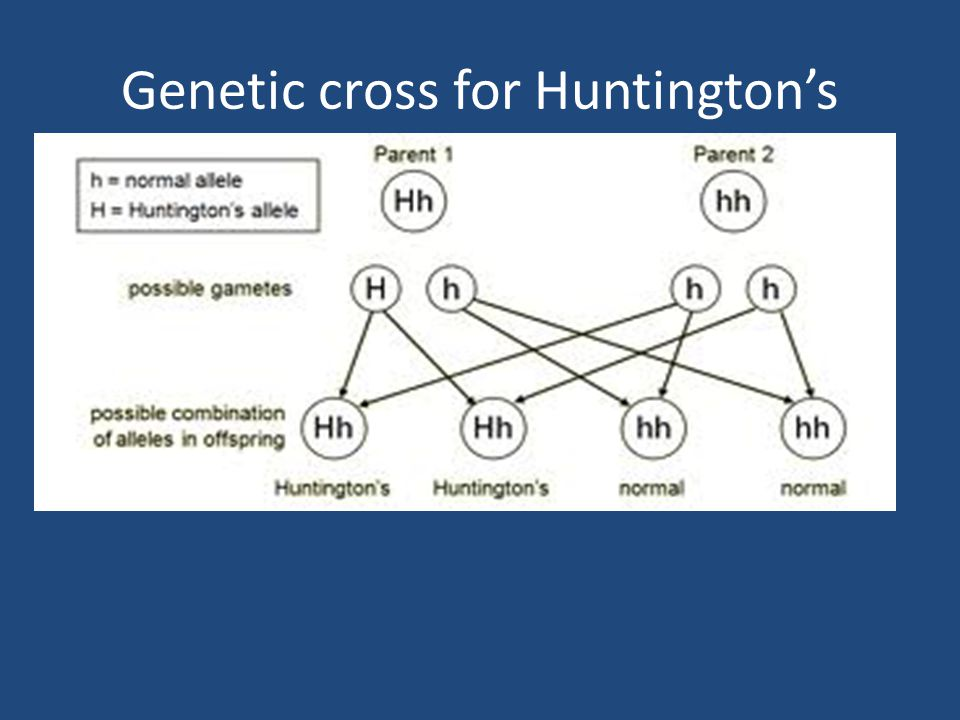 Genetic cross for Huntington's