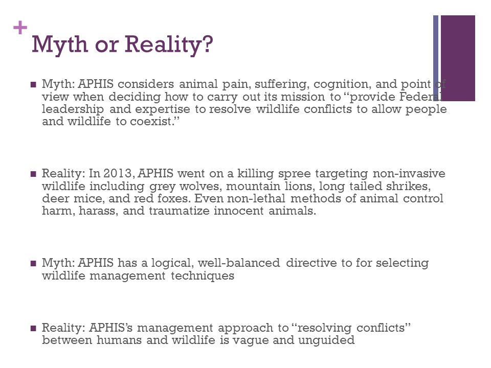 + Alternative for Myth/Reality MYTHREALITY APHIS considers animal pain, suffering, cognition, and point of view In 2013, APHIS went on a killing spree targeting non-invasive wildlife including grey wolves, mountain lions, long tailed shrikes, deer mice, and red foxes.