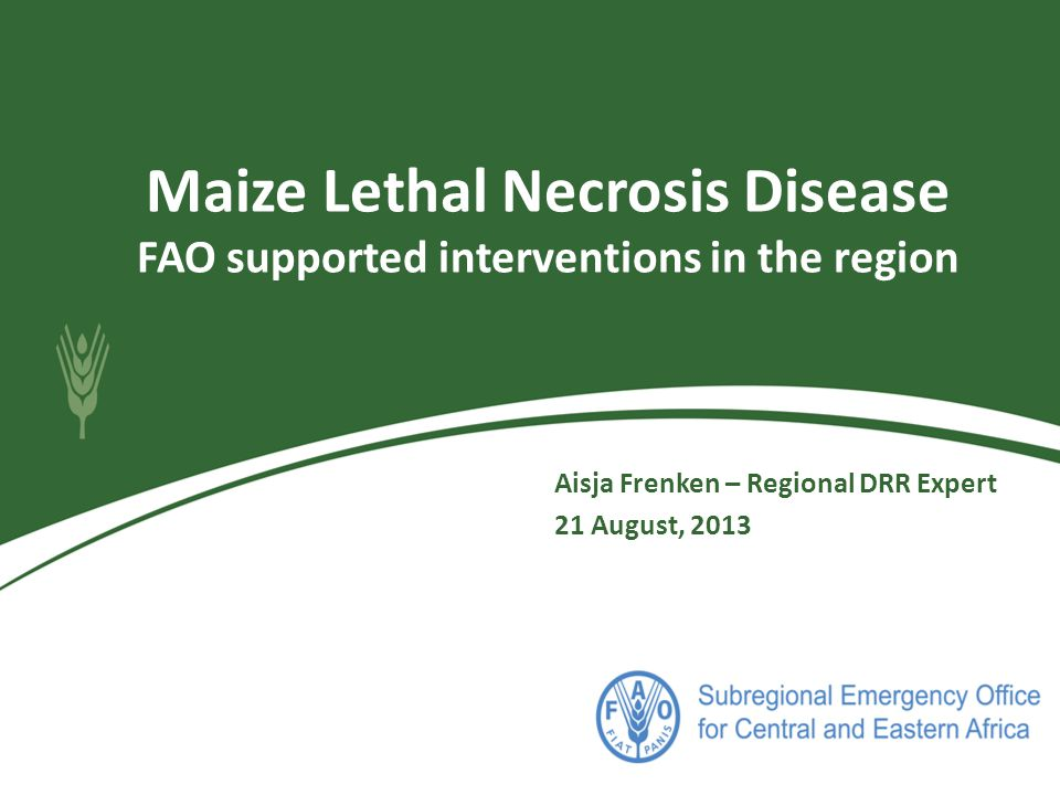 Maize Lethal Necrosis Disease FAO supported interventions in the region Aisja Frenken – Regional DRR Expert 21 August, 2013