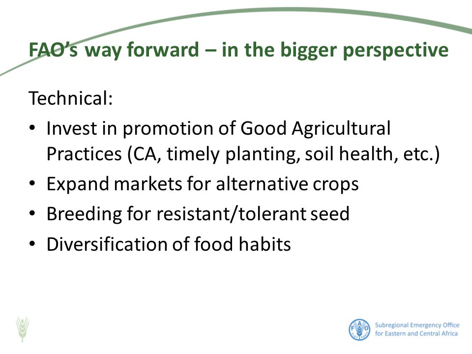 Technical: Invest in promotion of Good Agricultural Practices (CA, timely planting, soil health, etc.) Expand markets for alternative crops Breeding for resistant/tolerant seed Diversification of food habits FAO's way forward – in the bigger perspective