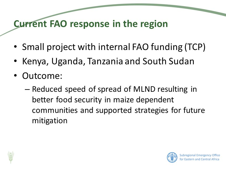 Small project with internal FAO funding (TCP) Kenya, Uganda, Tanzania and South Sudan Outcome: – Reduced speed of spread of MLND resulting in better food security in maize dependent communities and supported strategies for future mitigation Current FAO response in the region