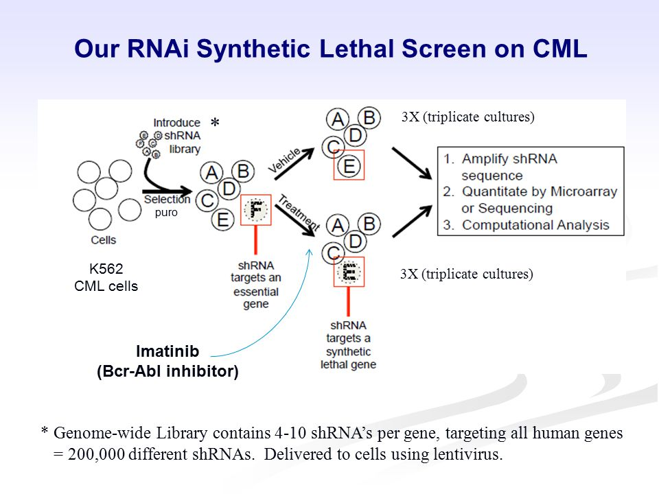 Our RNAi Synthetic Lethal Screen on CML Imatinib (Bcr-Abl inhibitor) K562 CML cells puro * * Genome-wide Library contains 4-10 shRNA's per gene, targeting all human genes = 200,000 different shRNAs.