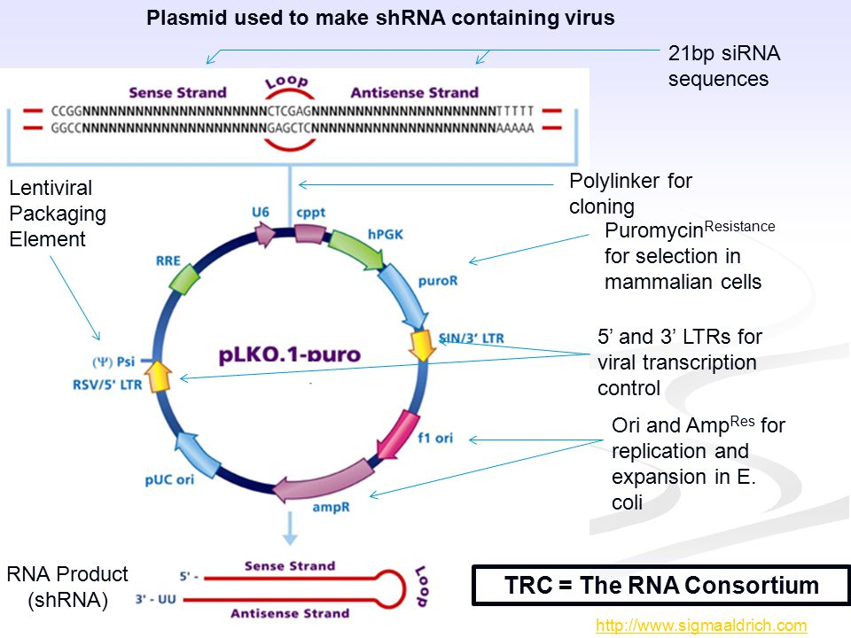 http://www.sigmaaldrich.com RNA Product (shRNA) Polylinker for cloning Puromycin Resistance for selection in mammalian cells Ori and Amp Res for repli