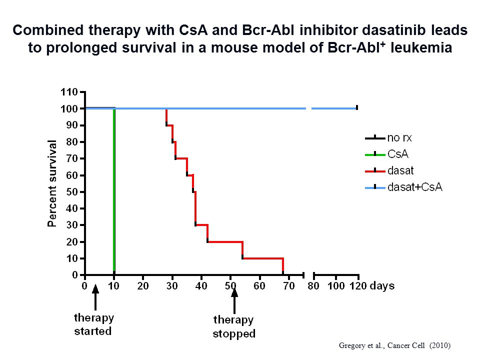 Combined therapy with CsA and Bcr-Abl inhibitor dasatinib leads to prolonged survival in a mouse model of Bcr-Abl + leukemia Gregory et al., Cancer Ce