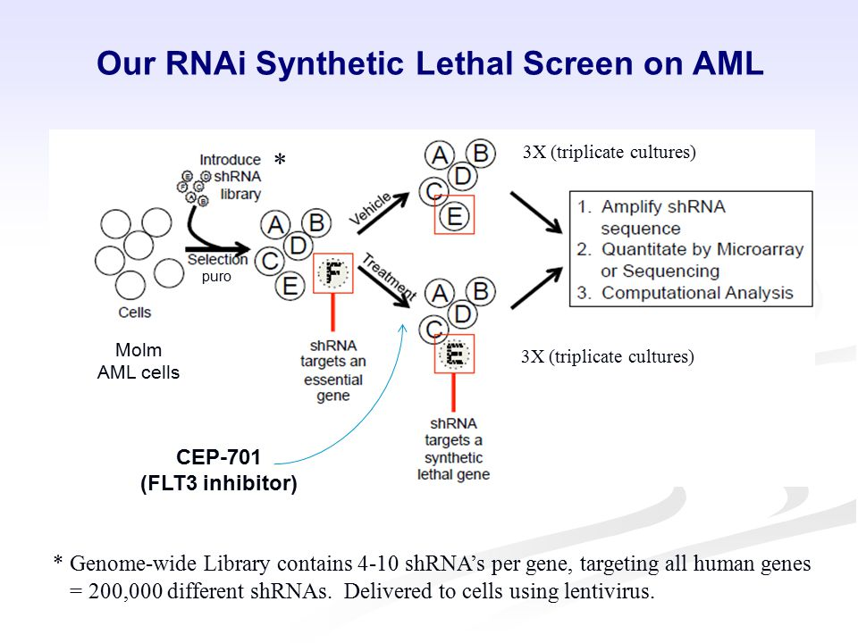 Our RNAi Synthetic Lethal Screen on AML CEP-701 (FLT3 inhibitor) Molm AML cells puro * * Genome-wide Library contains 4-10 shRNA's per gene, targeting all human genes = 200,000 different shRNAs.