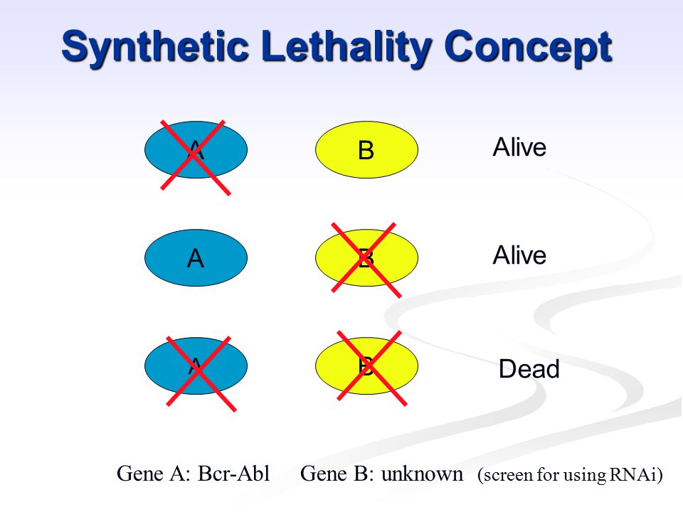 Synthetic Lethality Concept AB AB A B Alive Dead Gene A: Bcr-Abl Gene B: unknown (screen for using RNAi)