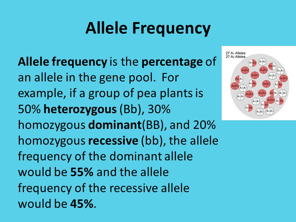 Allele Frequency Allele frequency is the percentage of an allele in the gene pool.