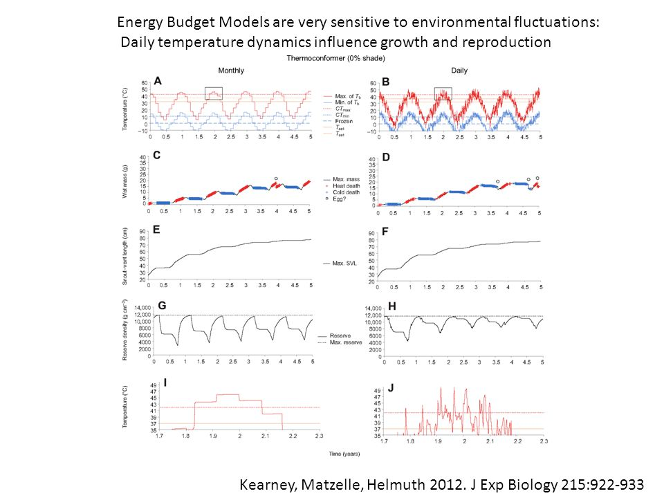 Kearney, Matzelle, Helmuth 2012. J Exp Biology 215:922-933 Energy Budget Models are very sensitive to environmental fluctuations: Daily temperature dy
