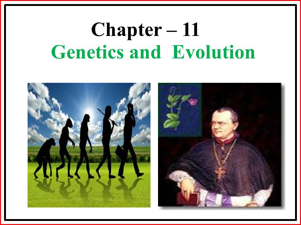 Chapter – 11 Genetics and Evolution