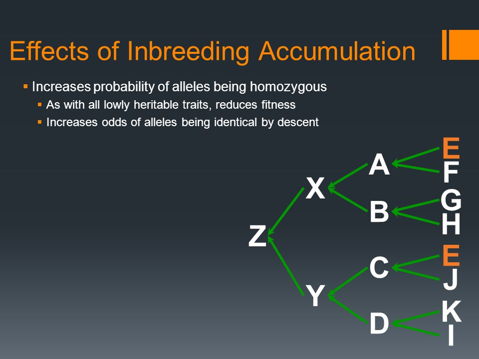  Increases probability of alleles being homozygous  As with all lowly heritable traits, reduces fitness  Increases odds of alleles being identical by descent Effects of Inbreeding Accumulation Z Y X A B C D E F G H E J K I
