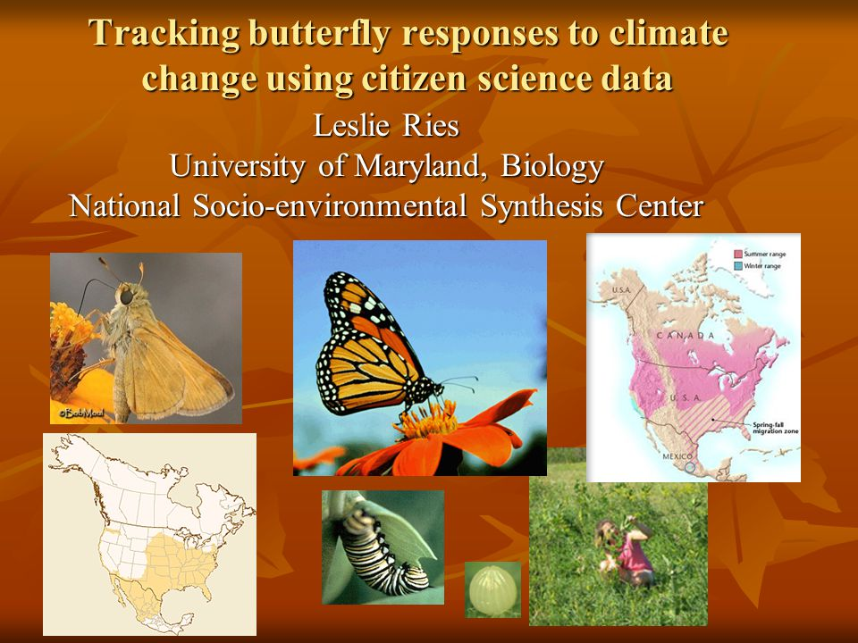 Tracking butterfly responses to climate change using citizen science data Leslie Ries University of Maryland, Biology National Socio-environmental Synthesis Center