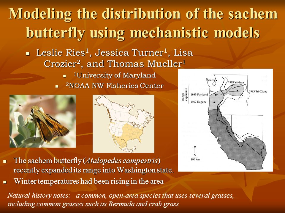 Modeling the distribution of the sachem butterfly using mechanistic models The sachem butterfly (Atalopedes campestris) recently expanded its range into Washington state.