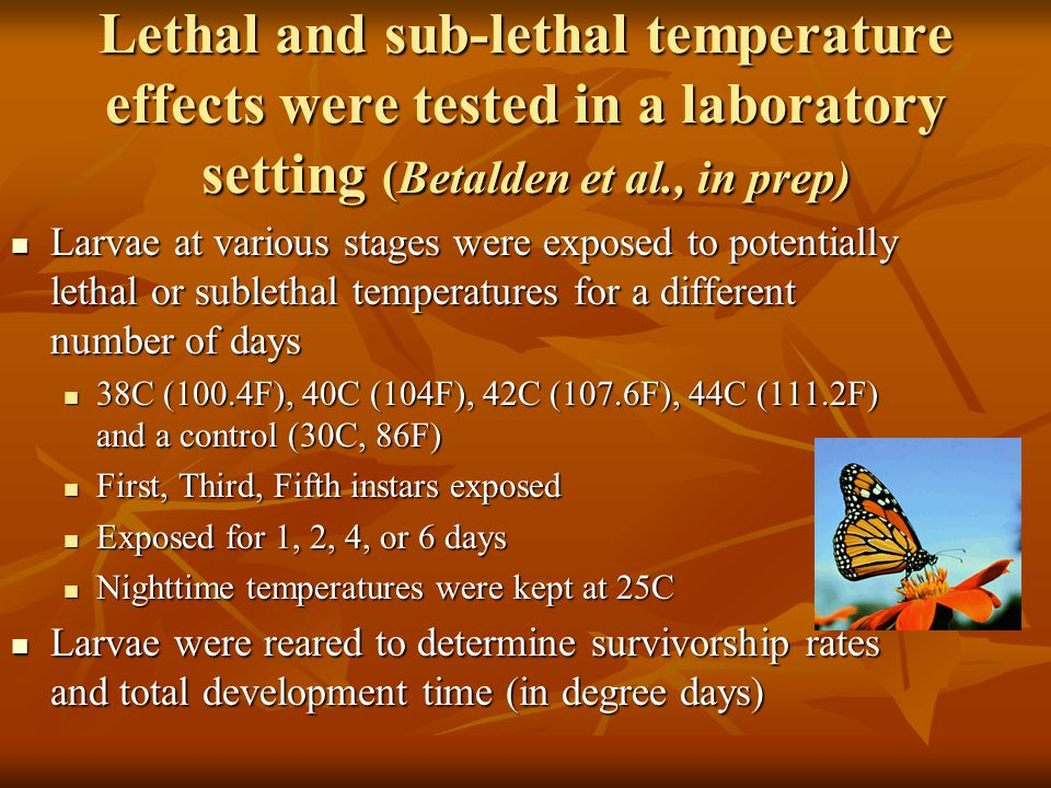 Lethal and sub-lethal temperature effects were tested in a laboratory setting (Betalden et al., in prep) Larvae at various stages were exposed to potentially lethal or sublethal temperatures for a different number of days Larvae at various stages were exposed to potentially lethal or sublethal temperatures for a different number of days 38C (100.4F), 40C (104F), 42C (107.6F), 44C (111.2F) and a control (30C, 86F) 38C (100.4F), 40C (104F), 42C (107.6F), 44C (111.2F) and a control (30C, 86F) First, Third, Fifth instars exposed First, Third, Fifth instars exposed Exposed for 1, 2, 4, or 6 days Exposed for 1, 2, 4, or 6 days Nighttime temperatures were kept at 25C Nighttime temperatures were kept at 25C Larvae were reared to determine survivorship rates and total development time (in degree days) Larvae were reared to determine survivorship rates and total development time (in degree days)