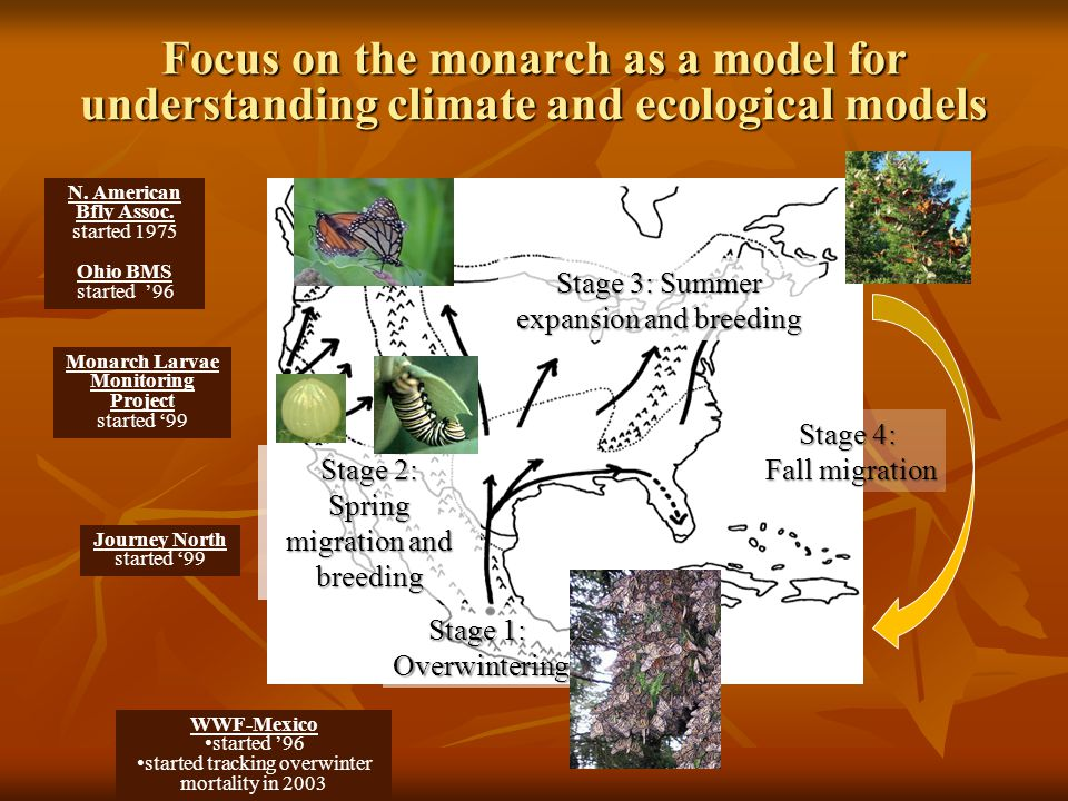 Focus on the monarch as a model for understanding climate and ecological models Stage 1: Overwintering Stage 2: Spring migration and breeding Stage 3: Summer expansion and breeding Stage 4: Fall migration Journey North started '99 Monarch Larvae Monitoring Project started '99 WWF-Mexico started '96 started tracking overwinter mortality in 2003 N.