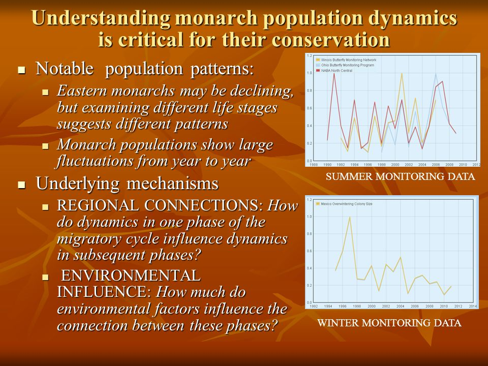 Understanding monarch population dynamics is critical for their conservation Notable population patterns: Notable population patterns: Eastern monarchs may be declining, but examining different life stages suggests different patterns Eastern monarchs may be declining, but examining different life stages suggests different patterns Monarch populations show large fluctuations from year to year Monarch populations show large fluctuations from year to year Underlying mechanisms Underlying mechanisms REGIONAL CONNECTIONS: How do dynamics in one phase of the migratory cycle influence dynamics in subsequent phases.