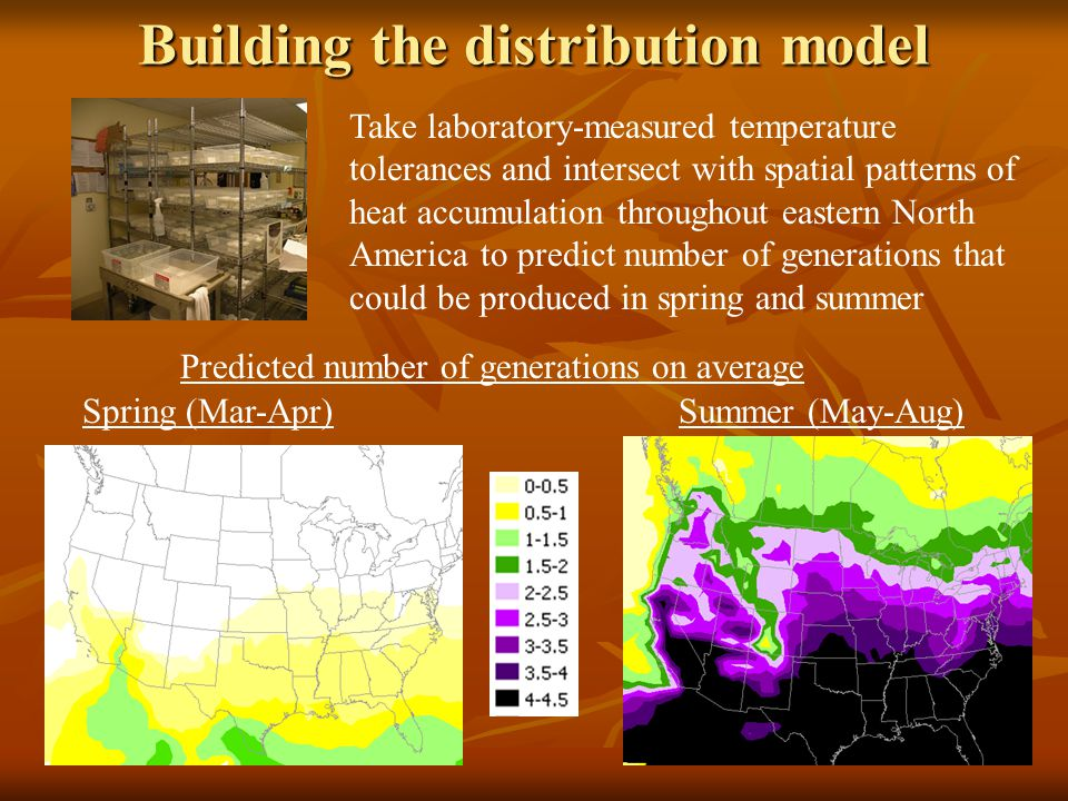 Building the distribution model Take laboratory-measured temperature tolerances and intersect with spatial patterns of heat accumulation throughout eastern North America to predict number of generations that could be produced in spring and summer Predicted number of generations on average Spring (Mar-Apr)Summer (May-Aug)