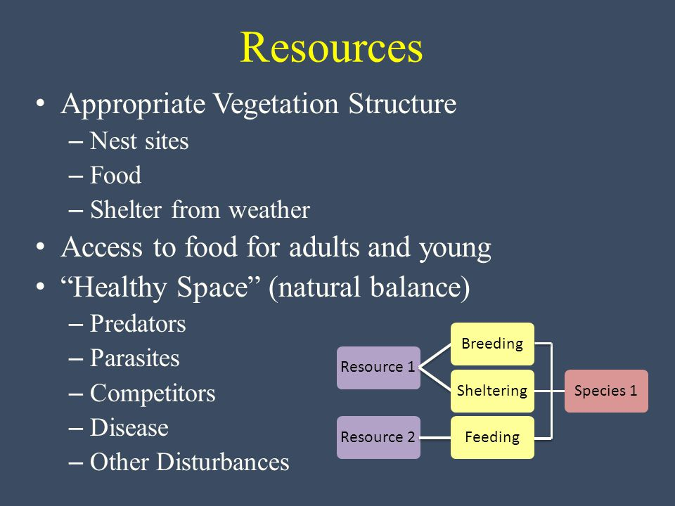 Resources Appropriate Vegetation Structure – Nest sites – Food – Shelter from weather Access to food for adults and young Healthy Space (natural balance) – Predators – Parasites – Competitors – Disease – Other Disturbances