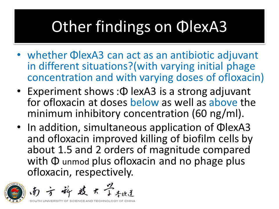 whether ΦlexA3 can act as an antibiotic adjuvant in different situations (with varying initial phage concentration and with varying doses of ofloxacin) Experiment shows :Φ lexA3 is a strong adjuvant for ofloxacin at doses below as well as above the minimum inhibitory concentration (60 ng/ml).
