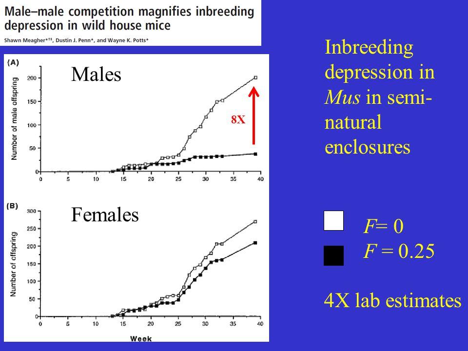 Inbreeding depression in Mus in semi- natural enclosures Males Females F= 0 F = 0.25 4X lab estimates 8X