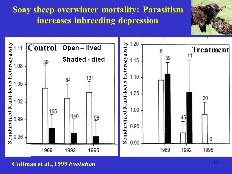 15 Soay sheep overwinter mortality: Parasitism increases inbreeding depression Coltman et al., 1999 Evolution Control Treatment Open – lived Shaded -