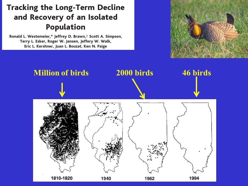 46 birdsMillion of birds2000 birds