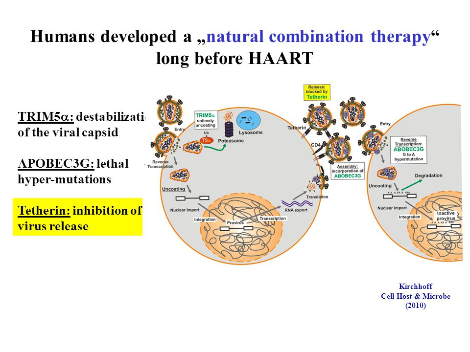 "Kirchhoff Cell Host & Microbe (2010) Humans developed a ""natural combination therapy"" long before HAART TRIM5  : destabilization of the viral capsid"