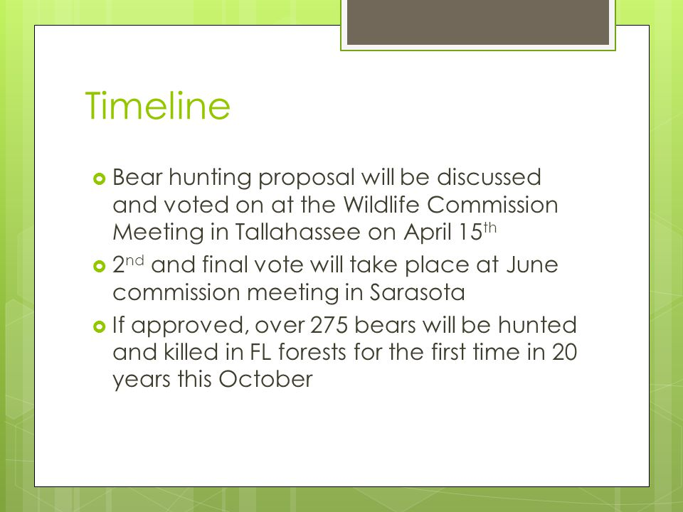 Timeline  Bear hunting proposal will be discussed and voted on at the Wildlife Commission Meeting in Tallahassee on April 15 th  2 nd and final vote will take place at June commission meeting in Sarasota  If approved, over 275 bears will be hunted and killed in FL forests for the first time in 20 years this October