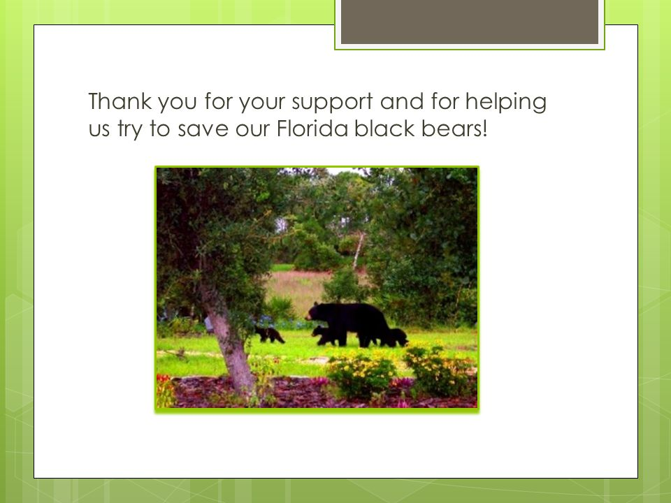 Thank you for your support and for helping us try to save our Florida black bears!
