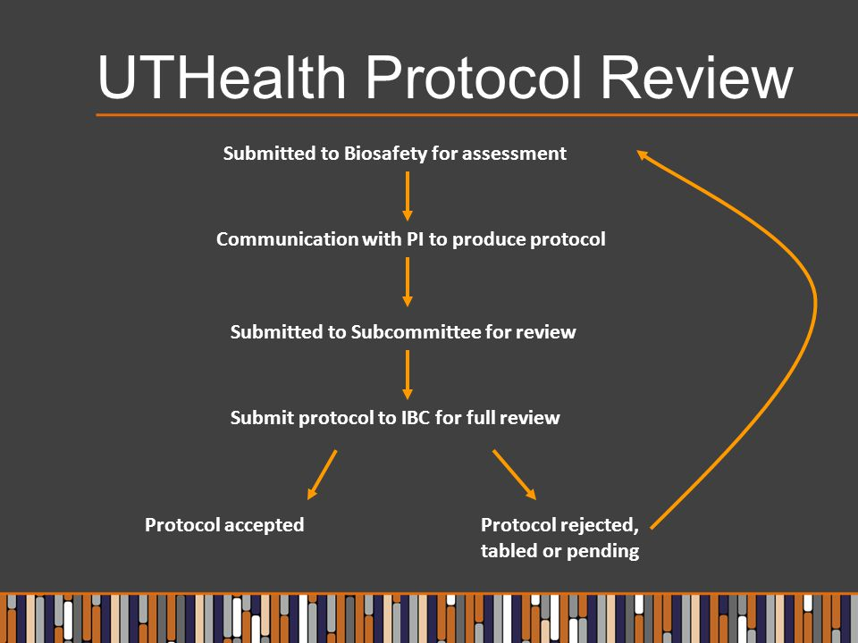 UTHealth Protocol Review Submitted to Biosafety for assessment Communication with PI to produce protocol Submitted to Subcommittee for review Submit protocol to IBC for full review Protocol acceptedProtocol rejected, tabled or pending
