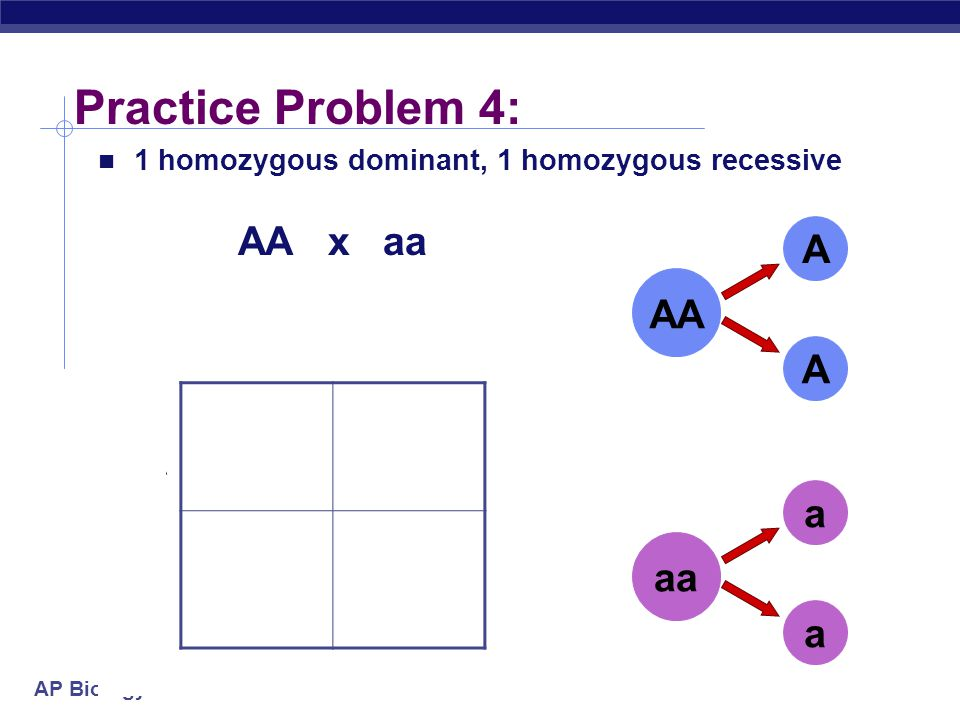 AP Biology Practice Problem 3: Aa x Aa A a A a Aa A a A a 2 heterozygous parents