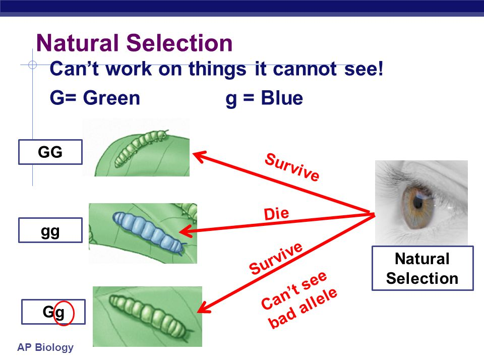 "AP Biology Natural Selection Chooses the ""fittest"" individual to survive have offspring Natural Selection Survive Die"