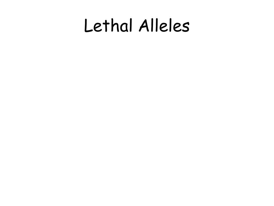 Lethal Alleles
