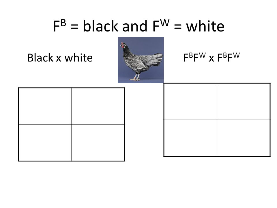 F B = black and F W = white Black x whiteF B F W x F B F W