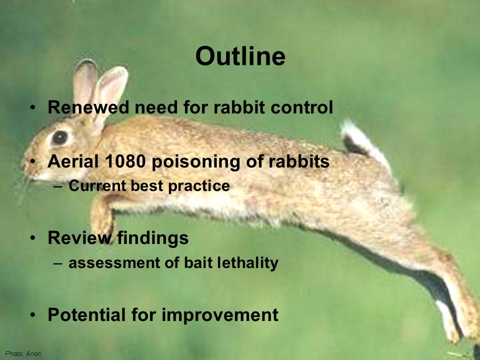 Outline Renewed need for rabbit control Aerial 1080 poisoning of rabbits –Current best practice Review findings –assessment of bait lethality Potential for improvement Photo: Anon