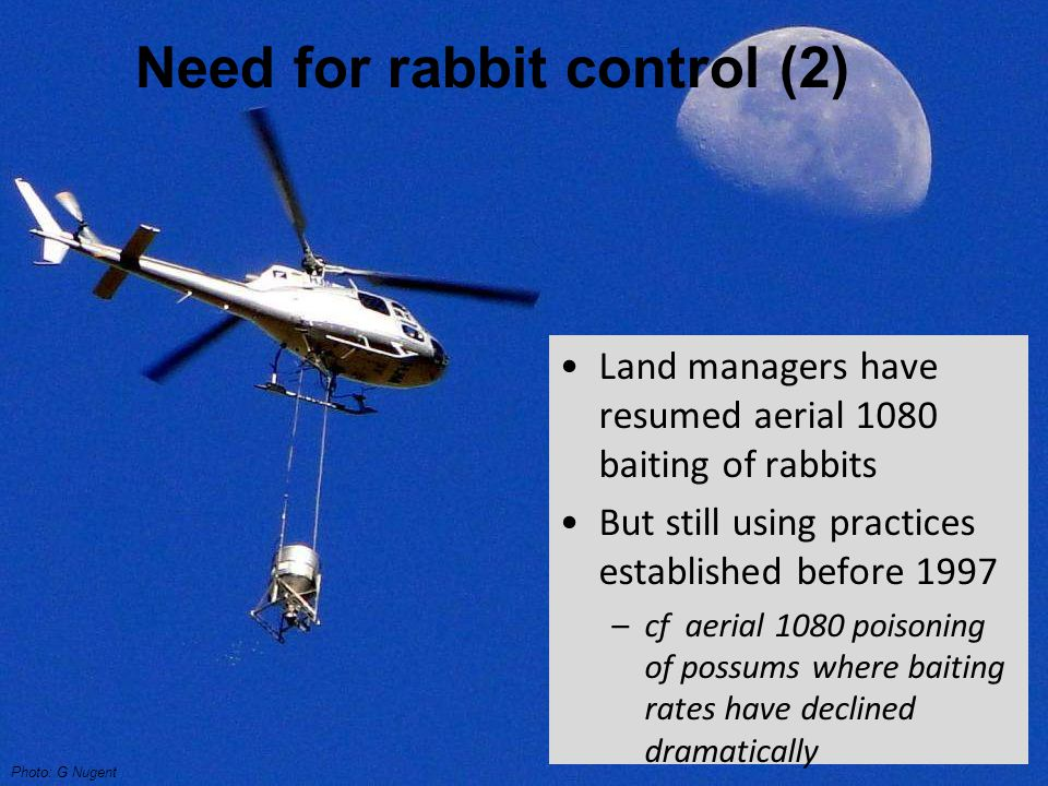 Need for rabbit control (2) Land managers have resumed aerial 1080 baiting of rabbits But still using practices established before 1997 –cf aerial 1080 poisoning of possums where baiting rates have declined dramatically Photo: G Nugent