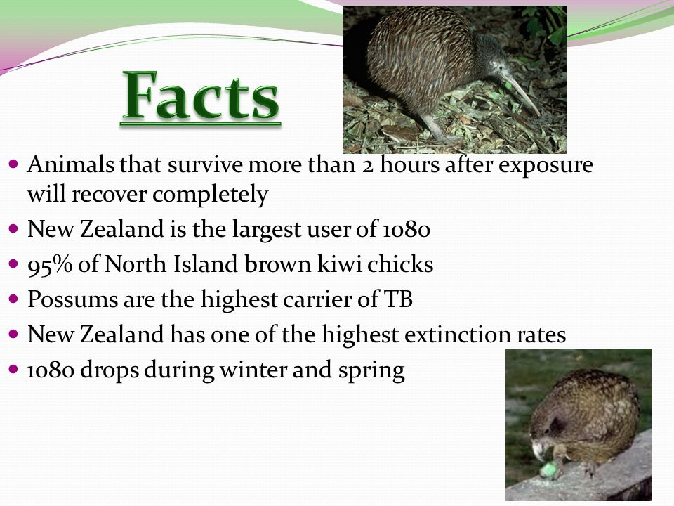 Animals that survive more than 2 hours after exposure will recover completely New Zealand is the largest user of 1080 95% of North Island brown kiwi chicks Possums are the highest carrier of TB New Zealand has one of the highest extinction rates 1080 drops during winter and spring