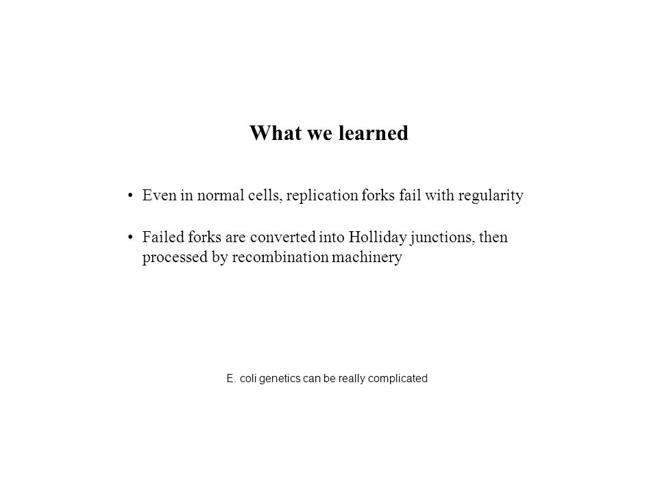 What we learned Even in normal cells, replication forks fail with regularity Failed forks are converted into Holliday junctions, then processed by recombination machinery E.