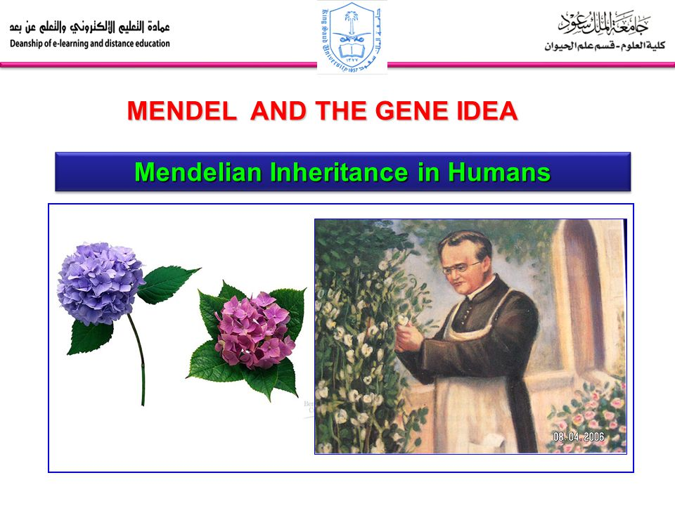 Mendelian Inheritance in Humans MENDEL AND THE GENE IDEA