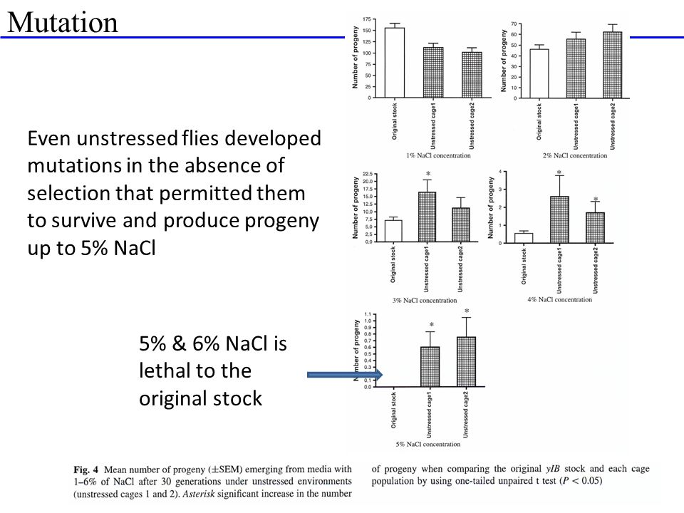 Mutation 5% & 6% NaCl is lethal to the original stock Even unstressed flies developed mutations in the absence of selection that permitted them to sur