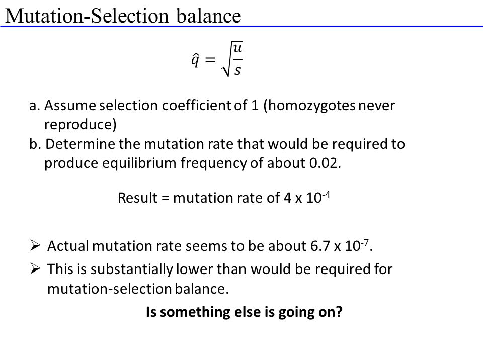 Mutation-Selection balance a. Assume selection coefficient of 1 (homozygotes never reproduce) b. Determine the mutation rate that would be required to