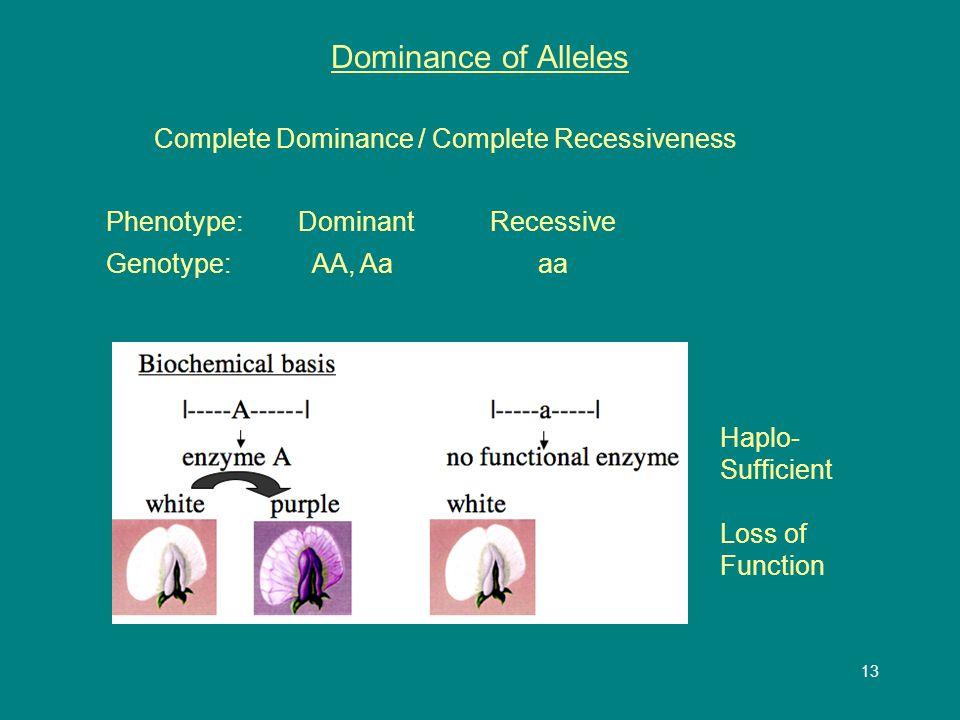 13 Dominance of Alleles Complete Dominance / Complete Recessiveness Phenotype: DominantRecessive Genotype: AA, Aa aa Haplo- Sufficient Loss of Function