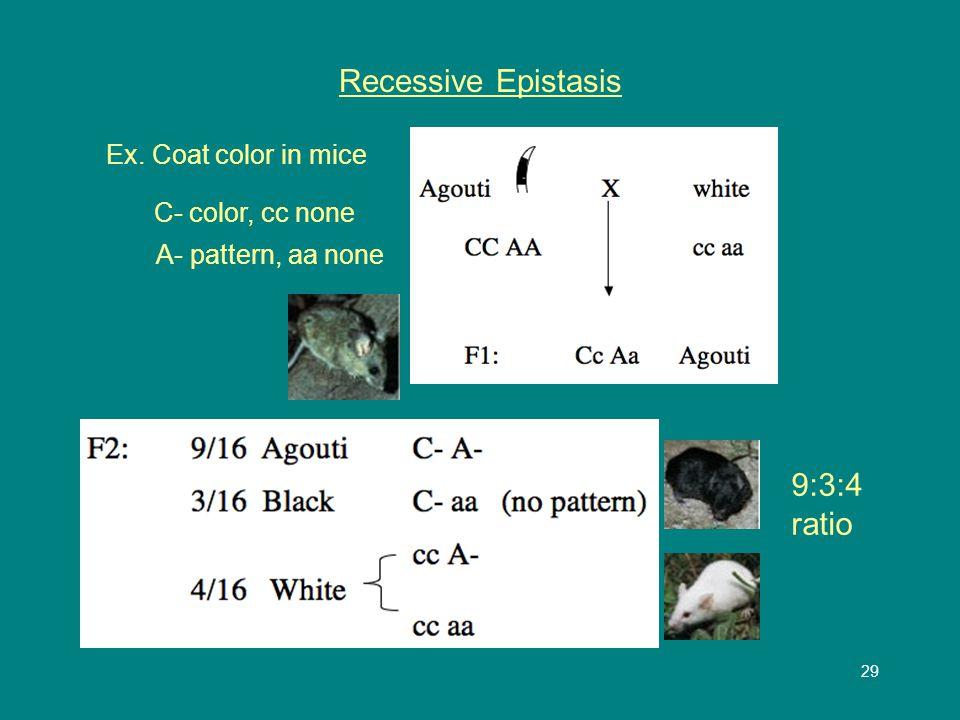 29 Recessive Epistasis Ex. Coat color in mice C- color, cc none A- pattern, aa none 9:3:4 ratio